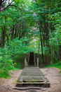 Free Stairs In Forest Stock Photo - 21150610