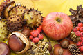 Free Autumn Leaves And Fruits Stock Image - 21151061