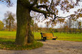 Free Bench In Autumn Park Stock Images - 21156054