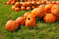Free Pumpkins Royalty Free Stock Images - 21156829