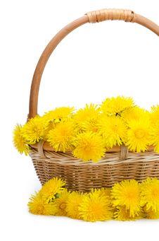 Yellow Dandelion Stock Image