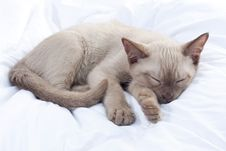 Free Russian Blue Cat Sleeping Royalty Free Stock Photos - 21152548