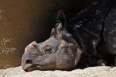 Free Rhinoceros Stock Image - 21152981