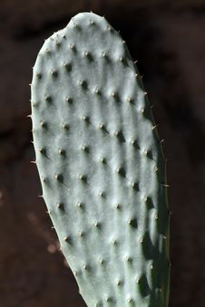 Free Cactus Stock Images - 21153634