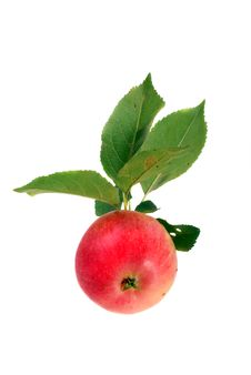 Freshly Picked Organic Apple Royalty Free Stock Photos