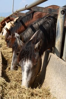 Free Horses In Paddock Stock Photo - 21154610