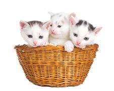 Free Three Kittens Sitting In Basket Royalty Free Stock Photo - 21156025