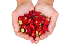 Free Wild Strawberries In Woman Hands Stock Images - 21156034