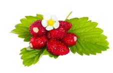 Free Wild Strawberries With Flower And Leaves Royalty Free Stock Photos - 21156038