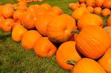 Free Pumpkins Stock Image - 21156851