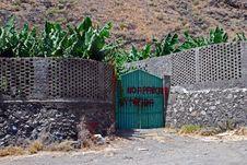 Free Bananas, Puerto Tazacorte Stock Images - 21159004