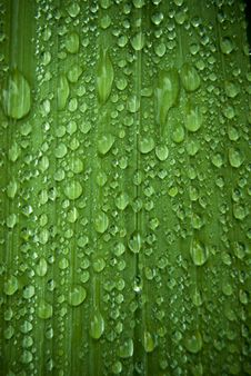 Free Rain Drops On A Green Leaf Stock Images - 21159684
