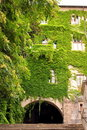 Free Ivy Covers An Old Town House Royalty Free Stock Photography - 21162747