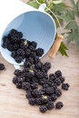 Free Blackberries Royalty Free Stock Photo - 21165655
