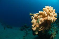 Free Mushroom Coral Stock Images - 21163894