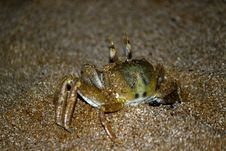 Free Crab Out Stock Image - 21164821