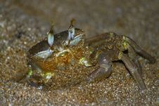 Free Crab Out Royalty Free Stock Photos - 21164908