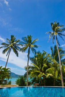 Free Swiming Pool And Coconut Tree Stock Images - 21165004
