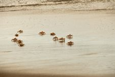 Free Cruising Crabs Royalty Free Stock Images - 21165029