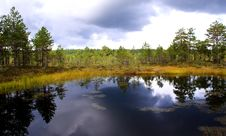 Free Swamp Lake At Cloudy Day And Trees Royalty Free Stock Photo - 21166345
