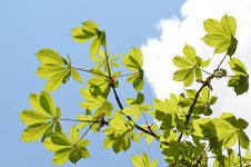 Free Leafs Flying In The Sky Royalty Free Stock Images - 21166879