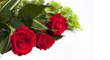 Free Red Roses Royalty Free Stock Photography - 21167007