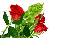 Free Roses Stock Photo - 21167010