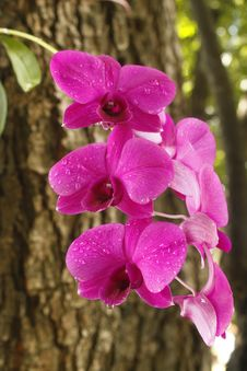 Free Orchid  On Tree Royalty Free Stock Images - 21167159