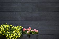 Free Dark Wooden Wall With Flowers Royalty Free Stock Photos - 21167318