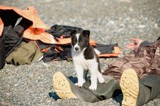 Free Pup On A Beach Royalty Free Stock Photo - 21167975