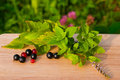 Free Red And Black Currants On A Wooden Board Royalty Free Stock Photography - 21175037