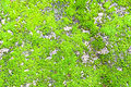 Free Moss Background Royalty Free Stock Images - 21176129