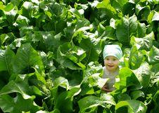 Free Horseradish Field Royalty Free Stock Image - 21170296