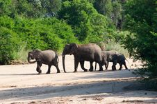 Free Elephants In Kruger Park Royalty Free Stock Photo - 21171315