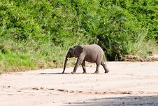 Free Small Elephant In Africa Stock Images - 21171354