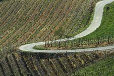 Free Vineyard Landscape Summer Royalty Free Stock Image - 21171906