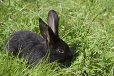 Free Portrait Of Young Rabbits In A Meadow Stock Photo - 21172000