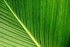 Free Palm Leaf Stock Images - 21173204