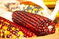 Free Indian Corn Royalty Free Stock Images - 21175399