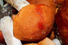 Free Several Orange-cap Boletuses Royalty Free Stock Image - 21177026