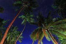 Free Coconut Trees At Night , Maldives Royalty Free Stock Image - 21177166