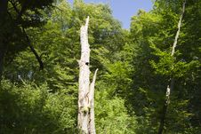 Free Tree After Lightning Strike Stock Images - 21179404