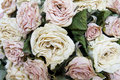 Free Dried Roses Royalty Free Stock Photo - 21189085