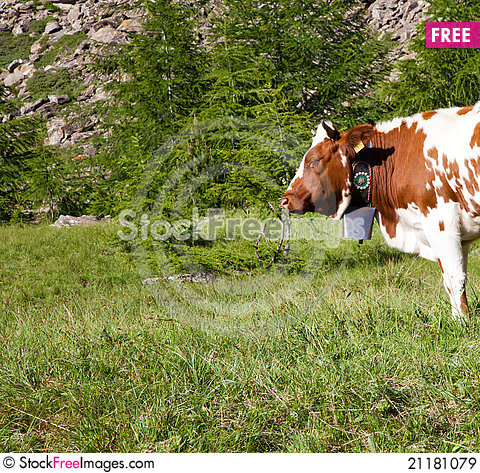 Free Cows And Italian Alps Royalty Free Stock Images - 21181079