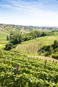 Free Italy - Piedmont Region. Barbera Vineyard Stock Photos - 21181053