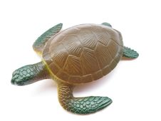Free Turtle Royalty Free Stock Photography - 21182327