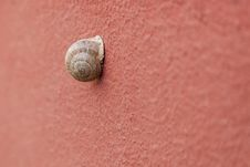 Snail On The Wall Royalty Free Stock Photography