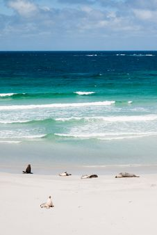 Free Seals On A Beach Royalty Free Stock Photo - 21185895