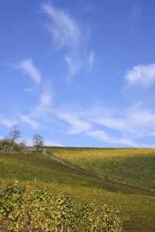 Free Vineyard Landscape In Autumn Stock Photos - 21187393
