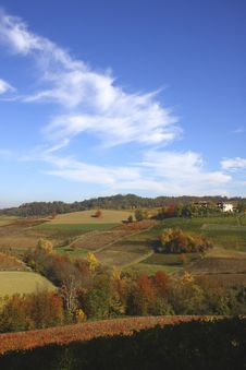 Free Vineyard Landscape In Autumn Royalty Free Stock Photo - 21187415